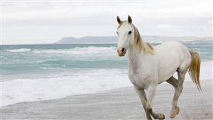 White Horse Superb 4K Wallpaper