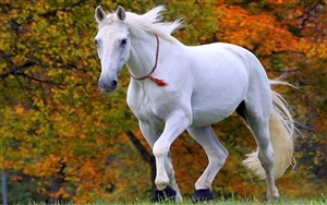 Horse Wallpapers Free Download Latest Pets Animals Hd Desktop