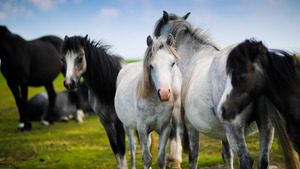 Horse wallpapers free download latest pets animals hd desktop images 48 download 64 views white and black horse 5k wallpaper thecheapjerseys Choice Image
