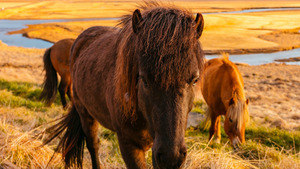 Wildlife Horse HD Wallpaper
