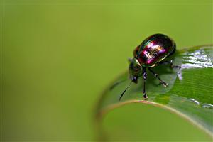Insect Beetles Wallpaper