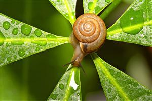 Snail Insect Wallpaper