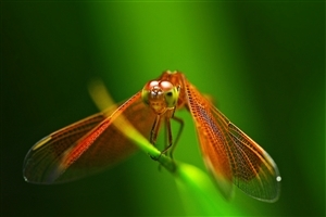 Wings Insect HD Wallpaper