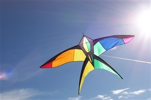 Festival of Kite HD Wallpaper