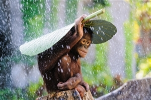 Baby Monkey Protect Him From Rain Photo
