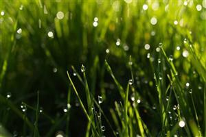 Beautiful Rain Drops on Green Grass