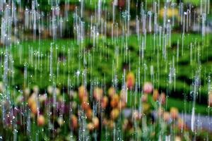 Close Up of Rain Drops Wallpaper