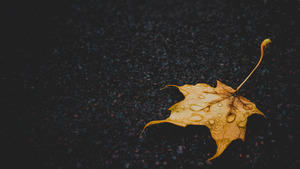 Leaf in Rain Droplets on Road 4K Image