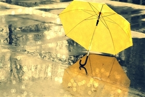 Yellow Umbrella During Rain Season Wallpaper