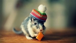 Charming Rat in Cap