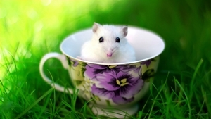 Cute White Rat Baby in Cup