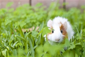 White Mouse in Garden Image