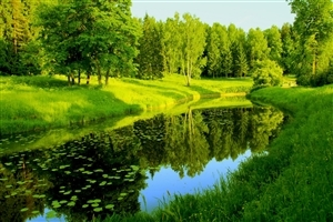 Amazing Green Nature HD Photos