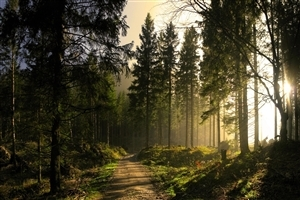 Beautiful Forest Nature Look