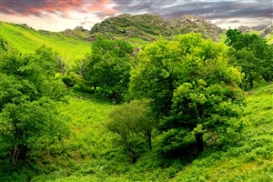 Beautiful Green Nature Pic