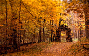 Beautiful Nature Autumn HD Pics