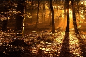 Beautiful Nature Forest Sunrise Wallpaper