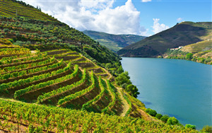 Beautiful Nature View of Douro River in Portugal Wallpaper