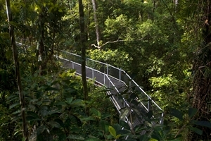 Daintree Rainforest in Queensland Australia Nature Wallpaper