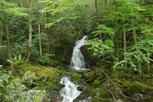 Great Smoky Mountains National Park Tourist Place in United States of America Wallpapers