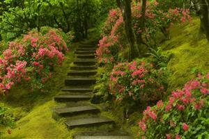 Green Nature Steps Image