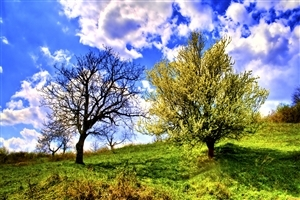 Green and Dry Tree Nature View Wallpaper