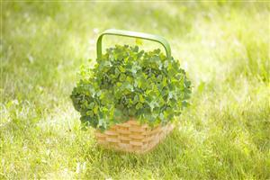 HD Nice Nature Leave Basket Wallpaper