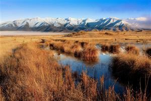 Nature Dry Grass and Mountain Mackenzie Country Wallpaper