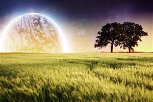 Nature Fantasy Field Wallpaper