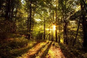 Nature Sunny Forest Wallpaper