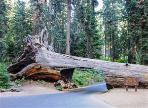 Sequoia National Park California US Tourist Wallpaper