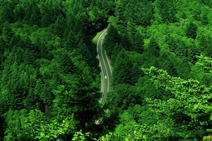 Super Nature Green Trees and Road Landscape Wallpaper