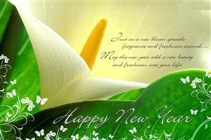 Happy New Year Greetings Wallpaper