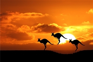 Amazing Pic of Australian National Animal Kangaroo During Sunset HD Photos for Laptop