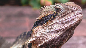 Animal Reptile Wallpaper