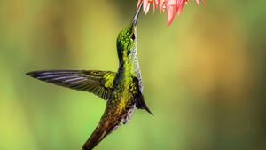 Beautiful Hummingbird Bird 5K Wallpaper