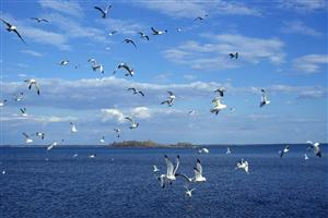 Birds on Blue Sea