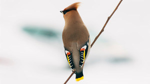Different Brown Bird HD Wallpaper