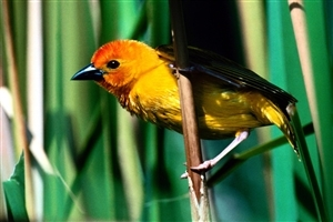 HD Nice Yellow Small Bird Wallpaper