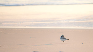 Seabird on Beach 4K Wallpaper