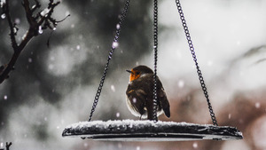 Small Bird During Snowfall 4K Wallpaper