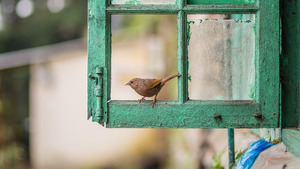 Small Bird Seating at Window Frame 4K Wallpapers