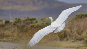 White Bird Flying in Sky HD Pictures