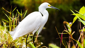 White Heron Bird in Jungle 5K Wallpaper