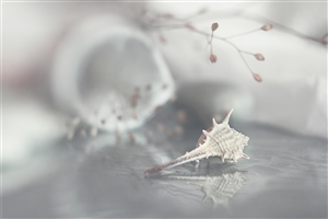 Amzing Seashell Background Photo