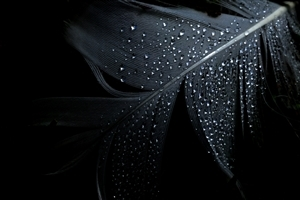 Black Feather Background Wallpaper
