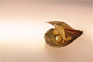 Pearl in Sea Shell HD Photo