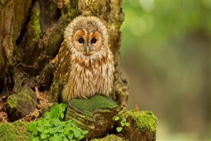 Beautiful Owl Baby Wallpaper