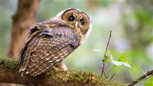 Bird Owl Superb Photo Shoot