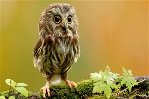 Cute Owl Baby Seating on Tree Branch HD Images